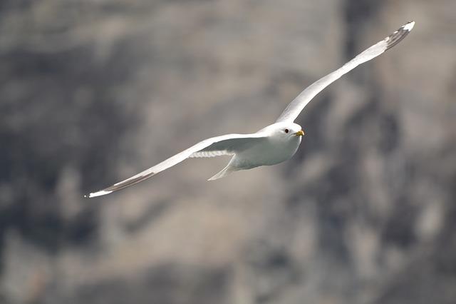 gull-442591_640